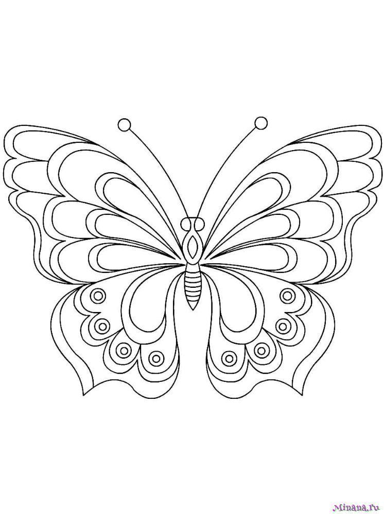 Раскраска Бабочка 13