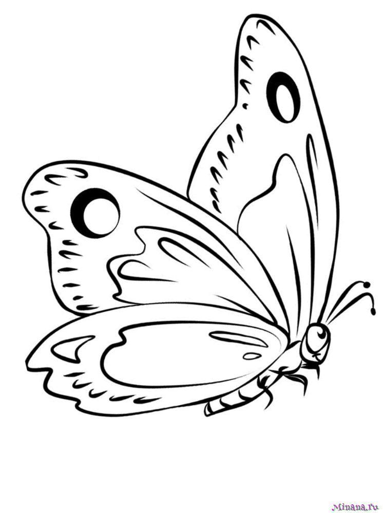 Раскраска Бабочка 3