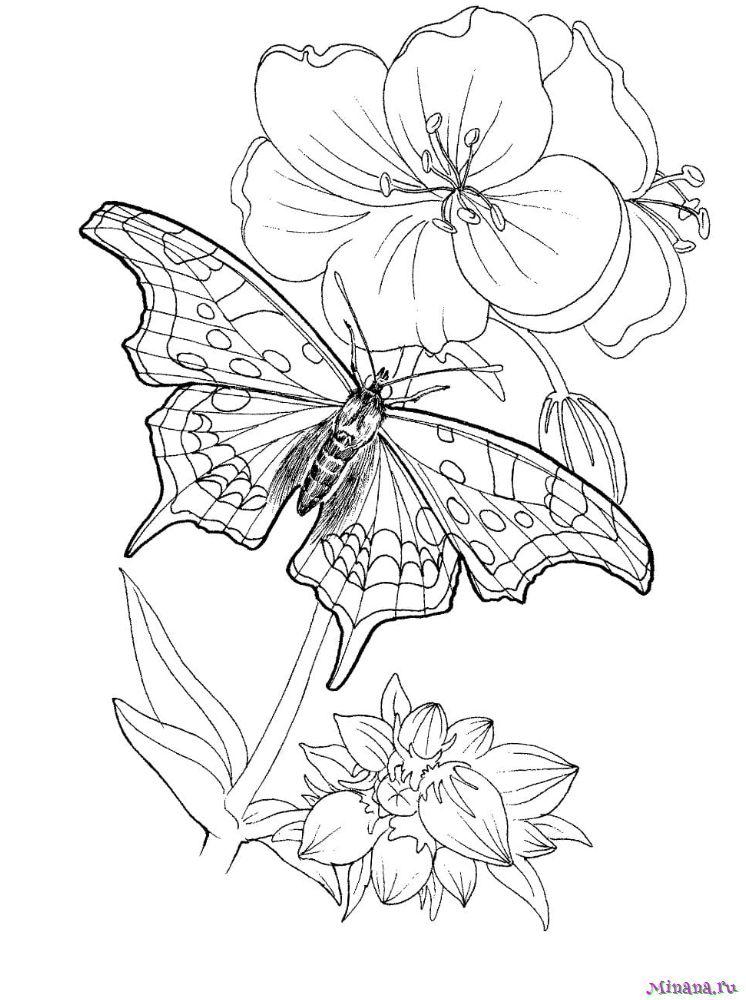 Раскраска Бабочка 5