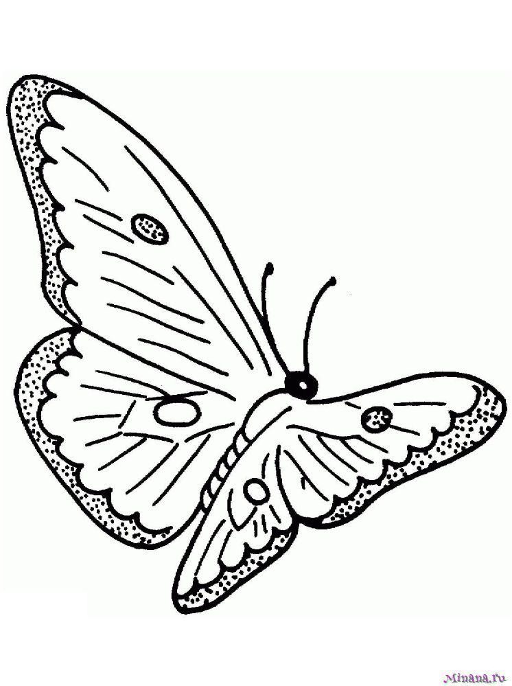 Раскраска Бабочка 6