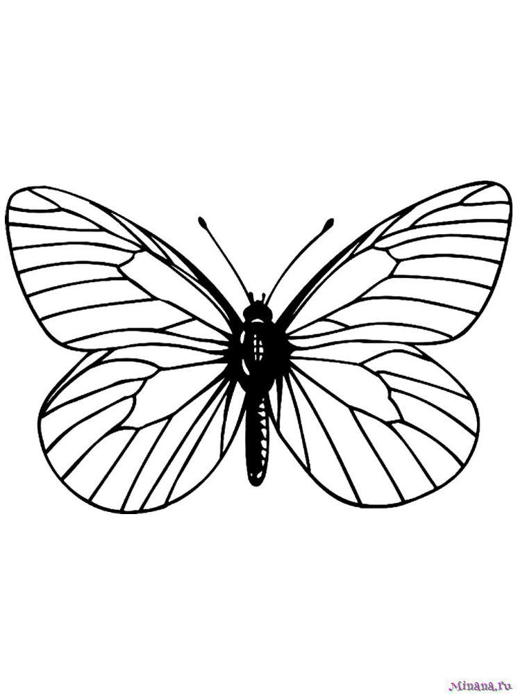 Раскраска Бабочка 8