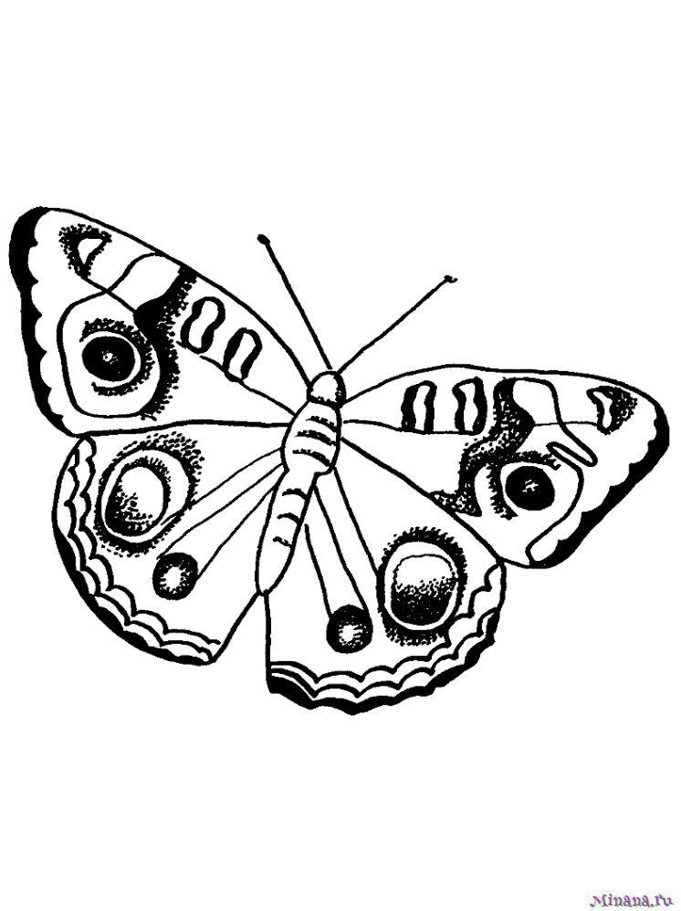 Раскраска Бабочка 9
