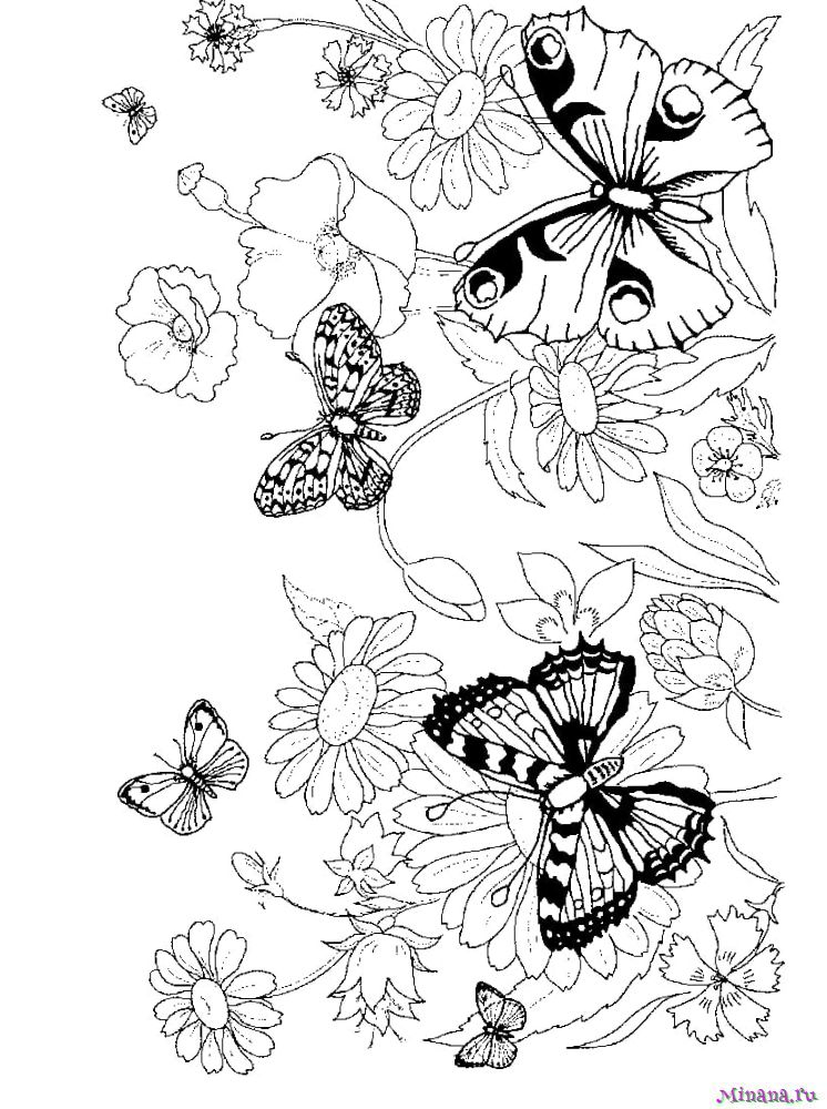Раскраска Бабочки 4