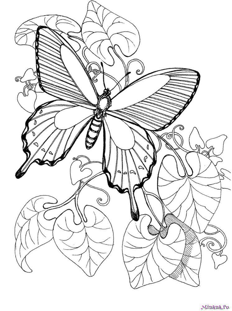 Раскраска Чудесная Бабочка