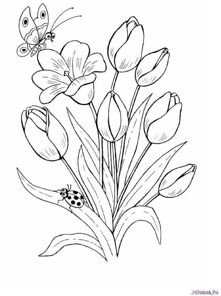 Раскраска Тюльпаны