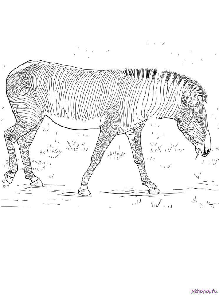 Раскраска зебра 10