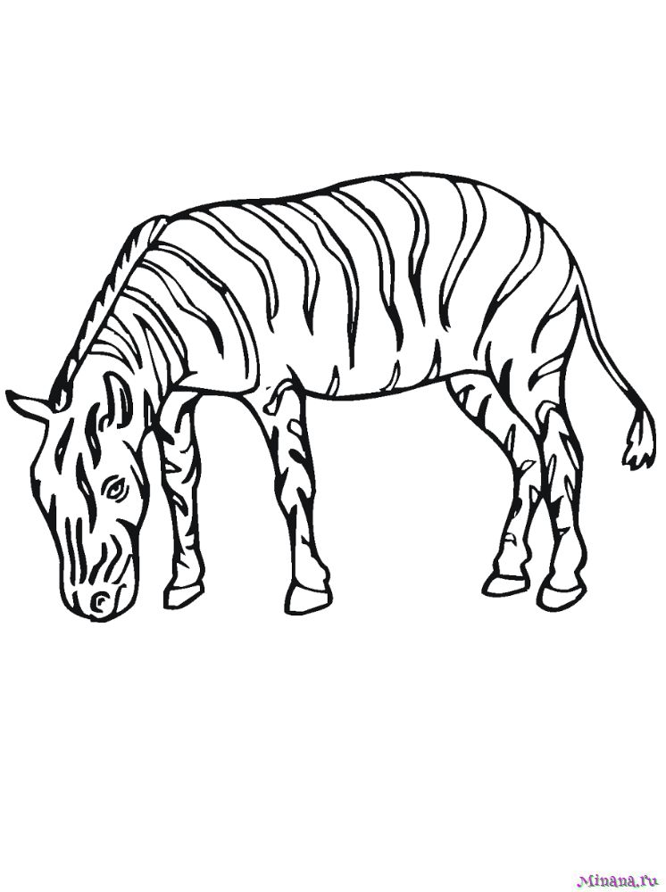 Раскраска зебра 11