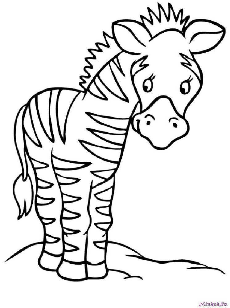 Раскраска зебра 5