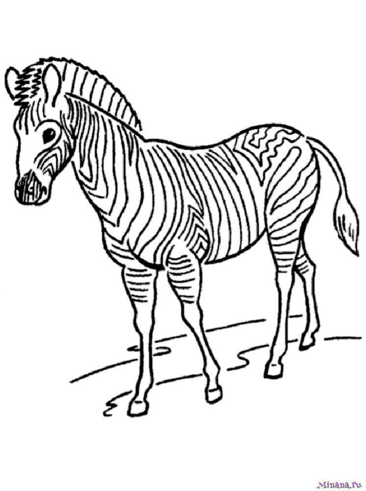 Раскраска зебра 6