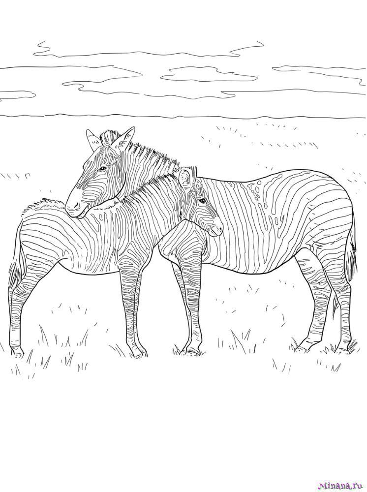 Раскраска зебра 9