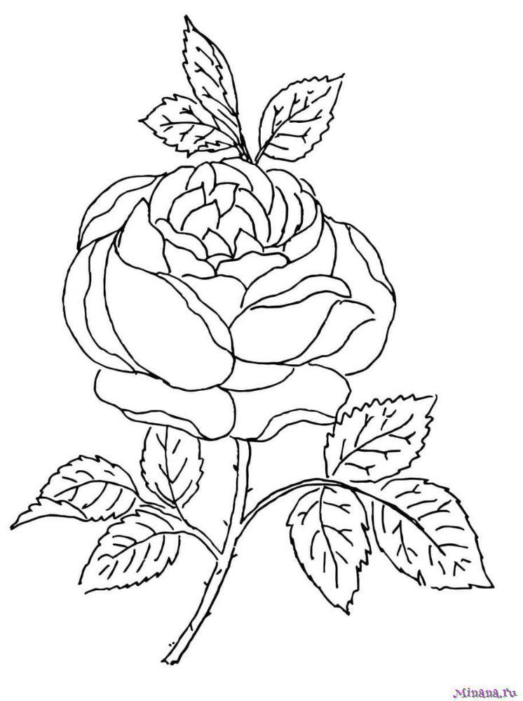 Раскраска роза   Minana.ru