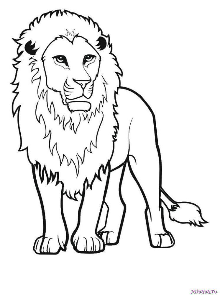 Раскраска лев 1