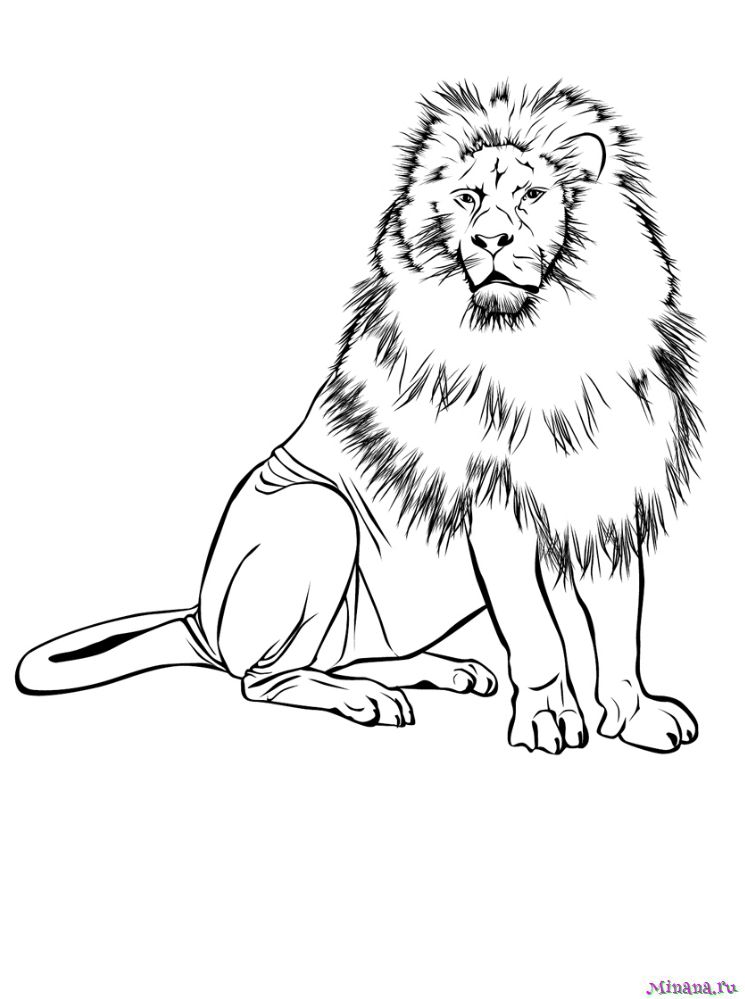 Раскраска лев 4