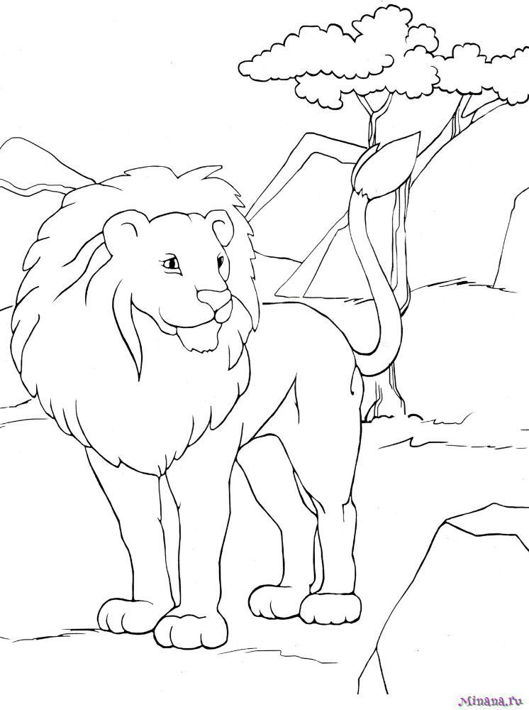 Раскраска лев 7