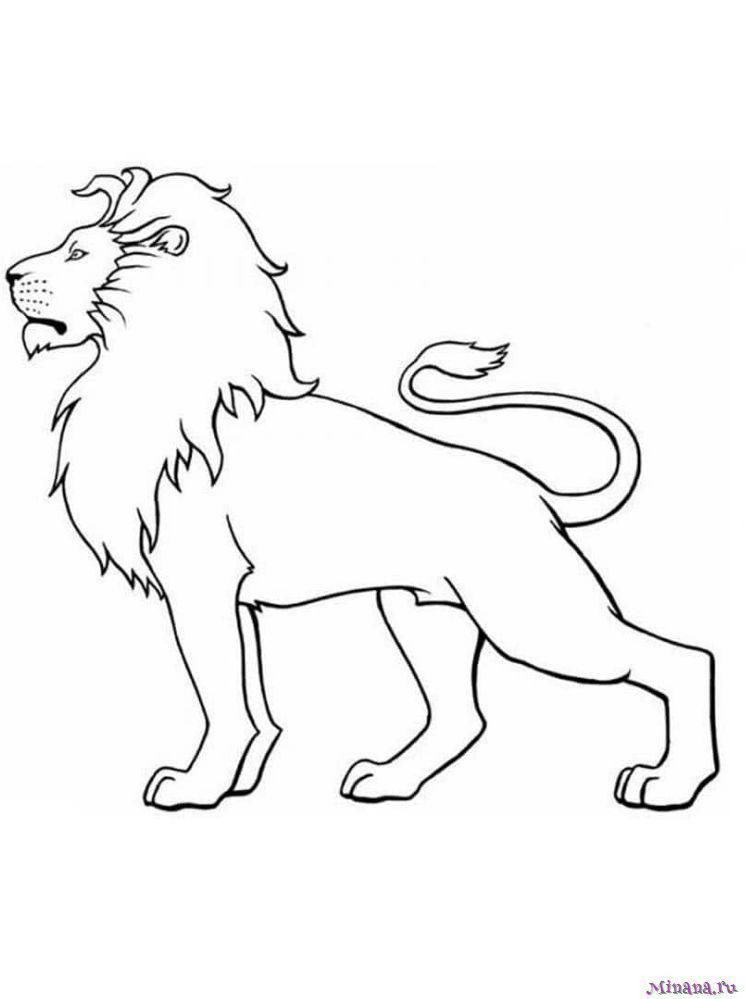 Раскраска лев 8