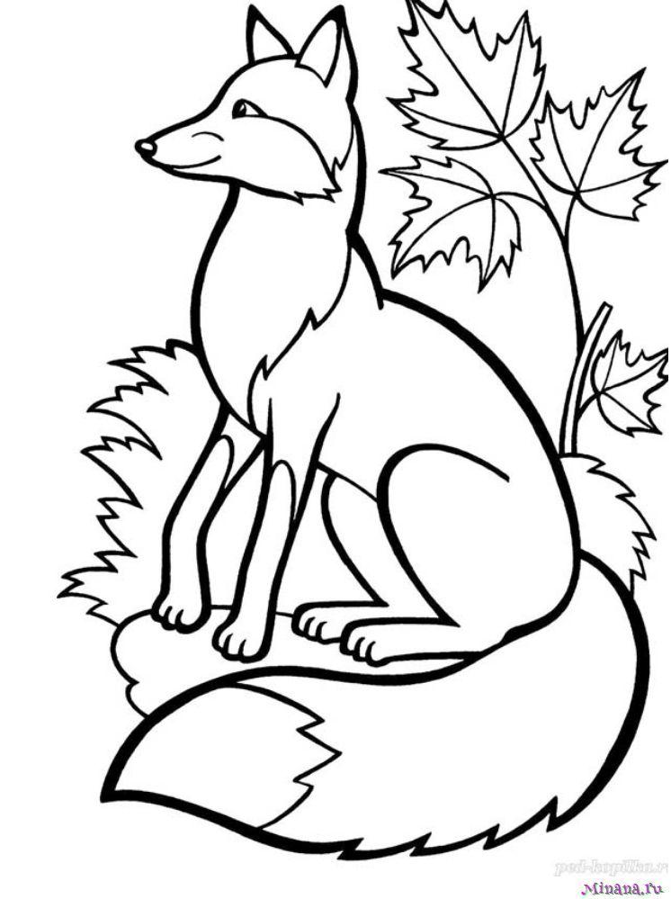 Раскраска лиса 6