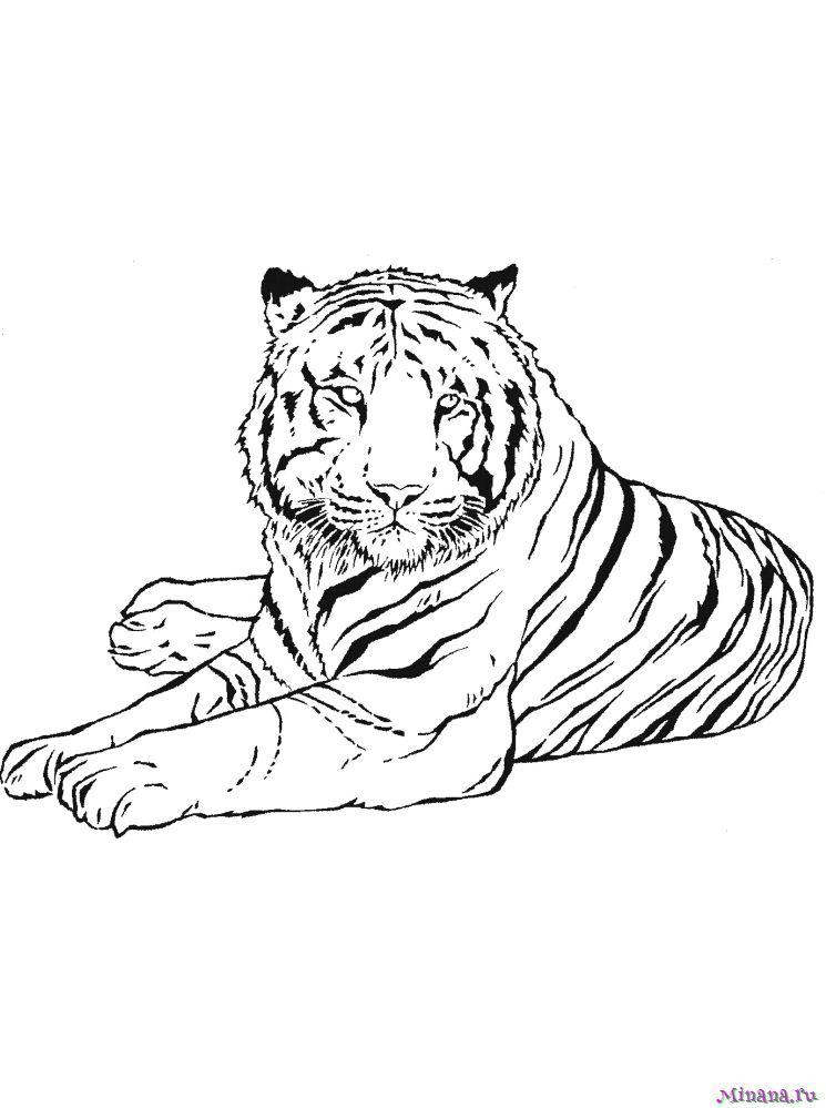 мне амурский тигр раскраска картинки вашей