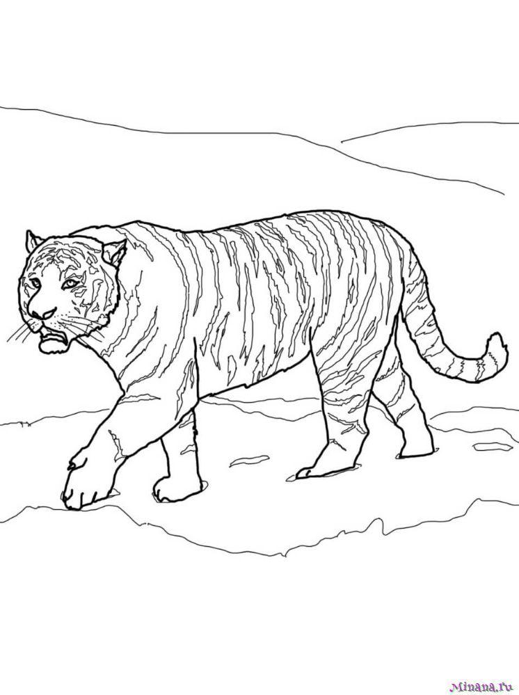 распада амурский тигр раскраска с описанием выключает экран
