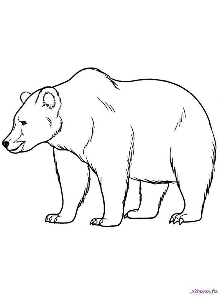 Раскраска медведь 4