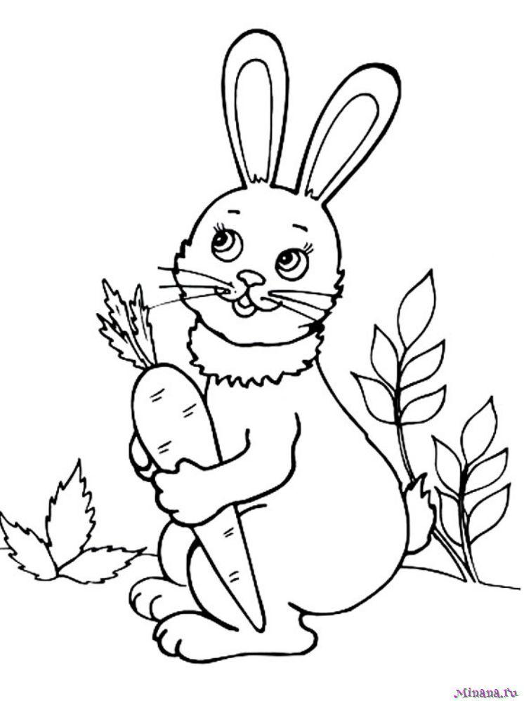 Раскраска заяц 4