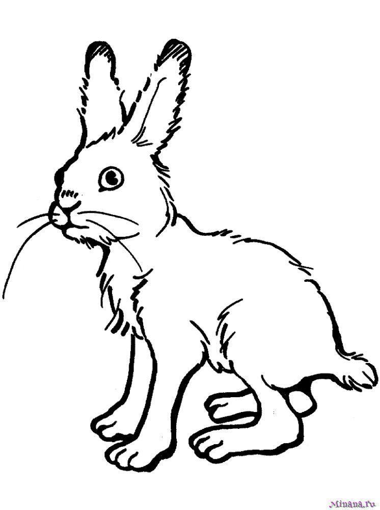 Раскраска заяц 6