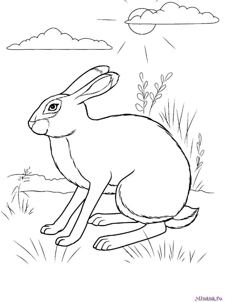 Раскраска заяц 9