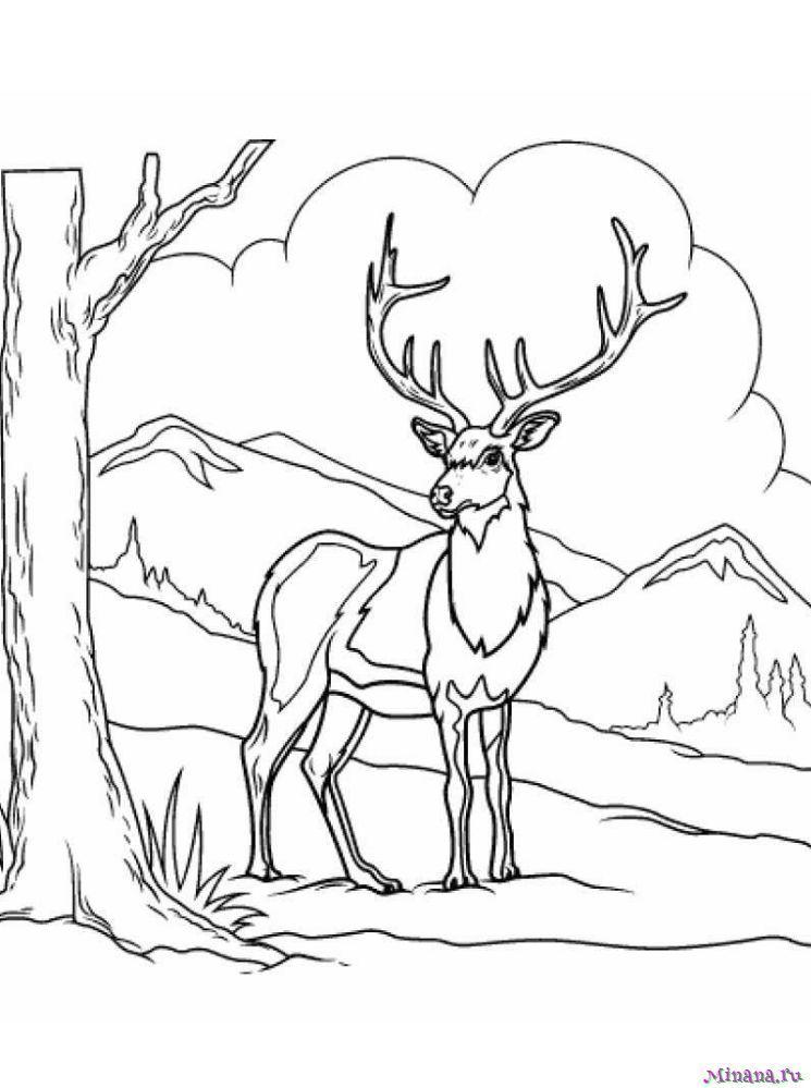Раскраска олень 12