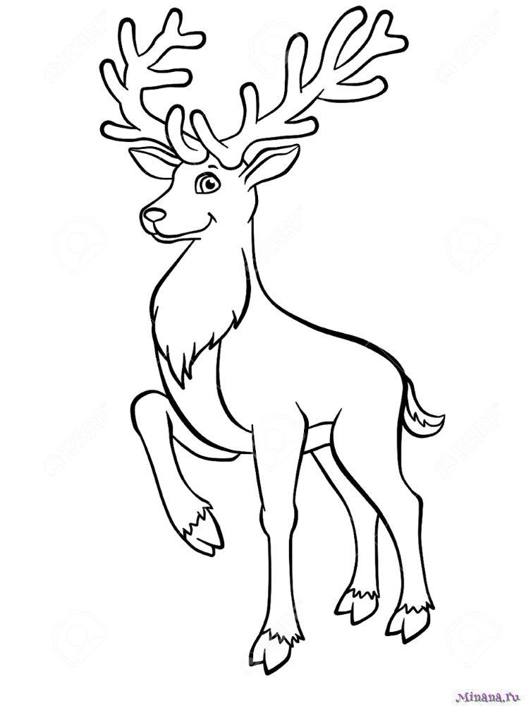 Раскраска олень 5