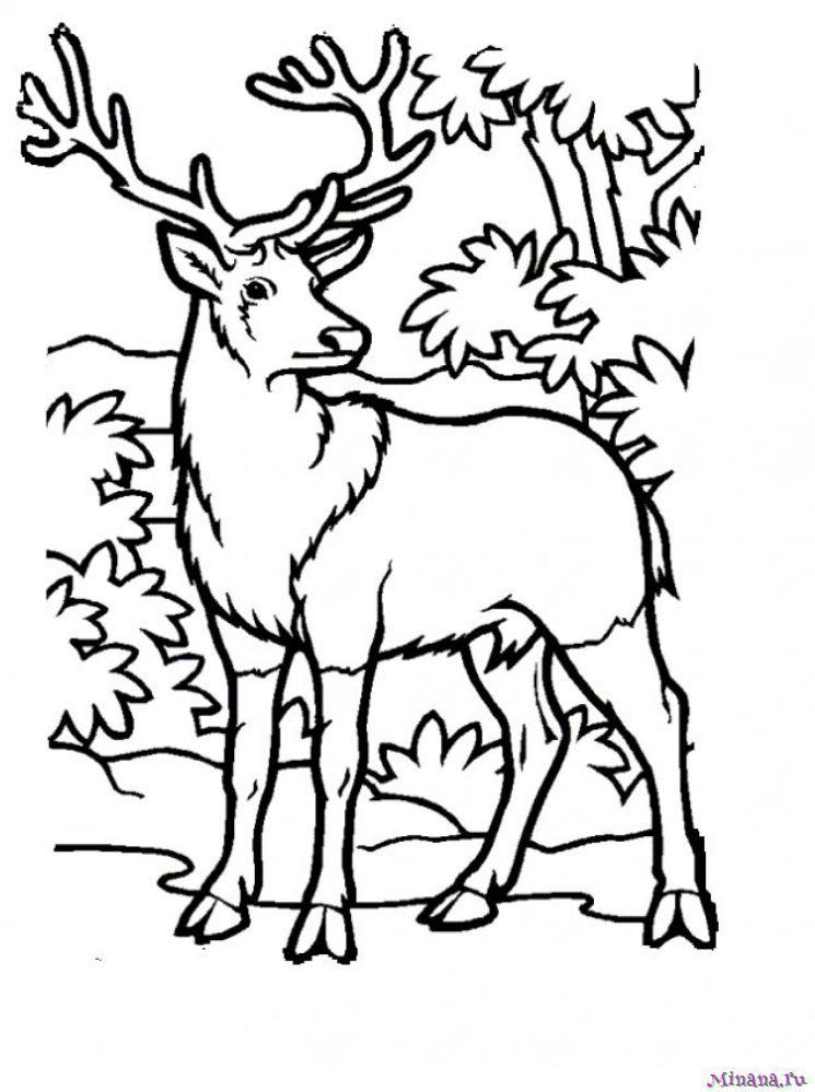 Раскраска олень 9