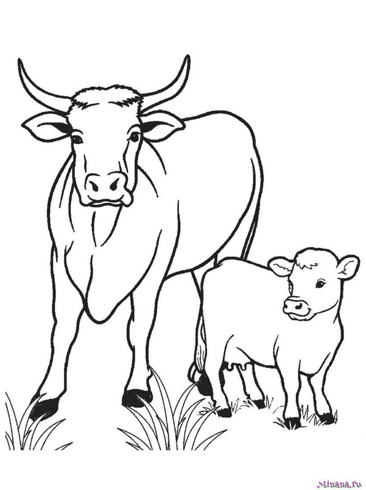 Раскраска корова 11