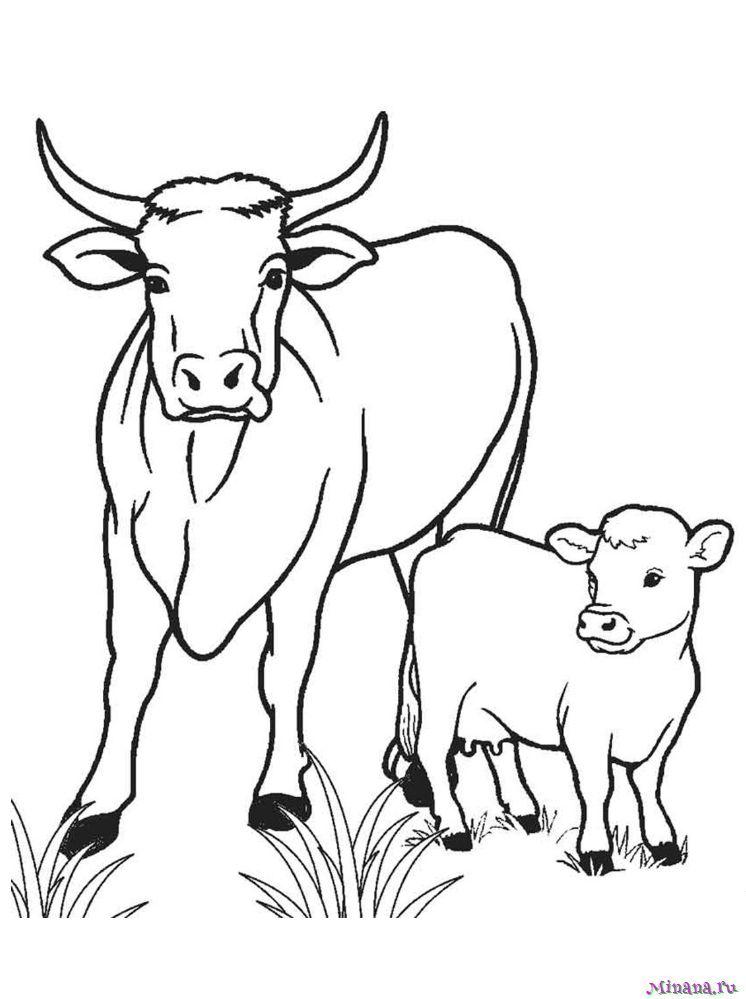 Раскраска корова 11 | Minana.ru