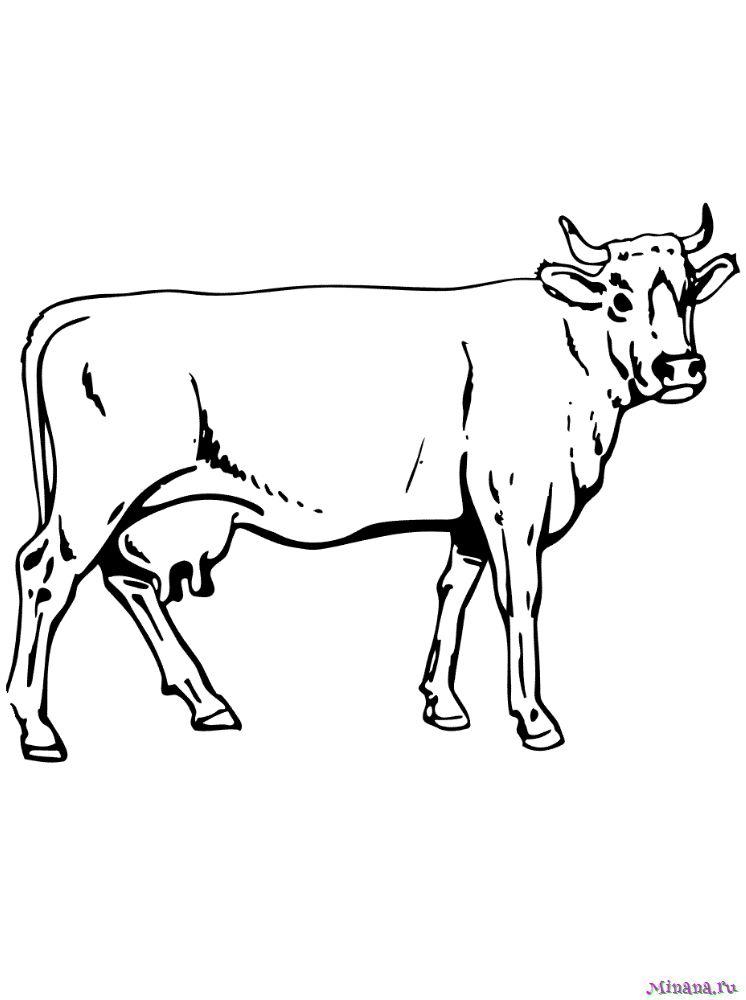 Раскраска корова 8