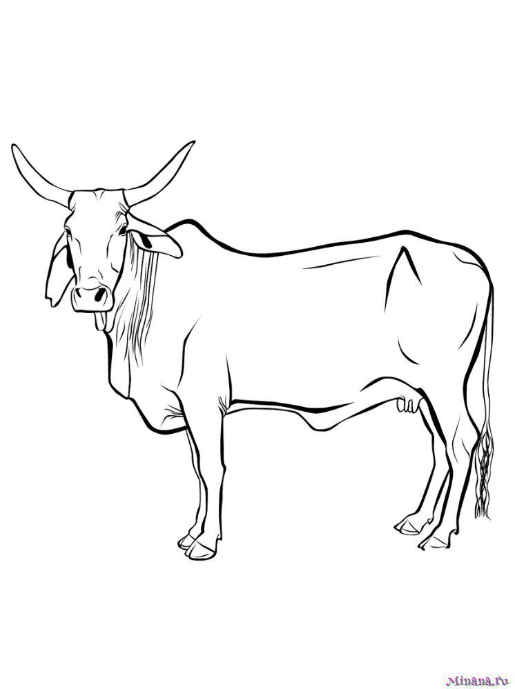 Раскраска корова 9 | Minana.ru