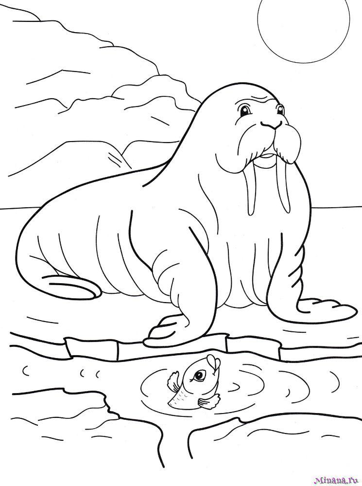 Раскраска морж на льду