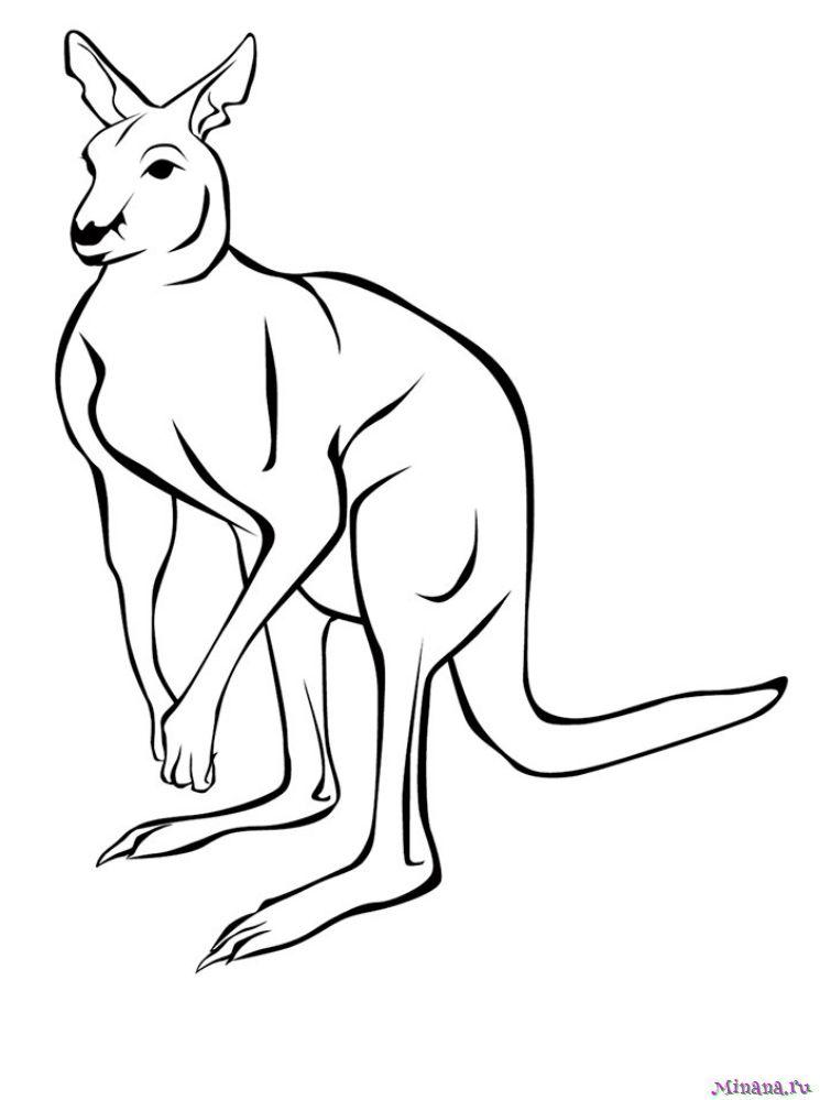 Раскраска кенгуру 6