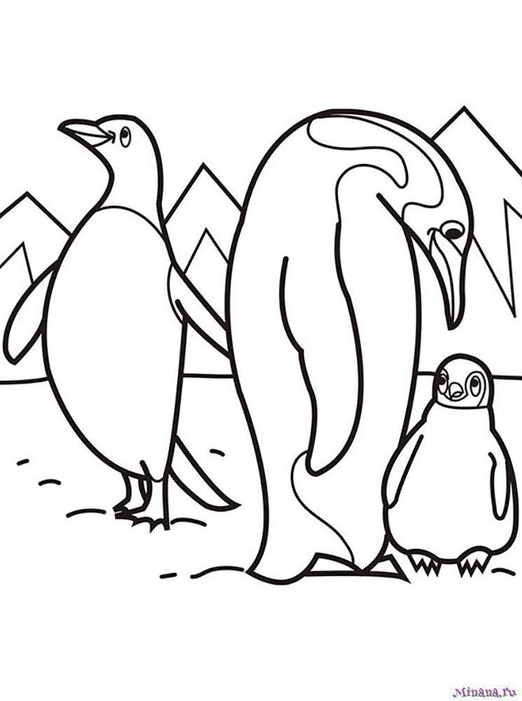 Раскраска пингвины