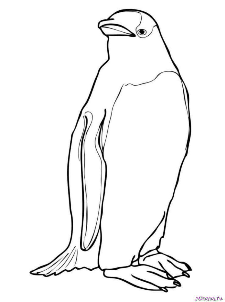 Раскраска пингвин 4