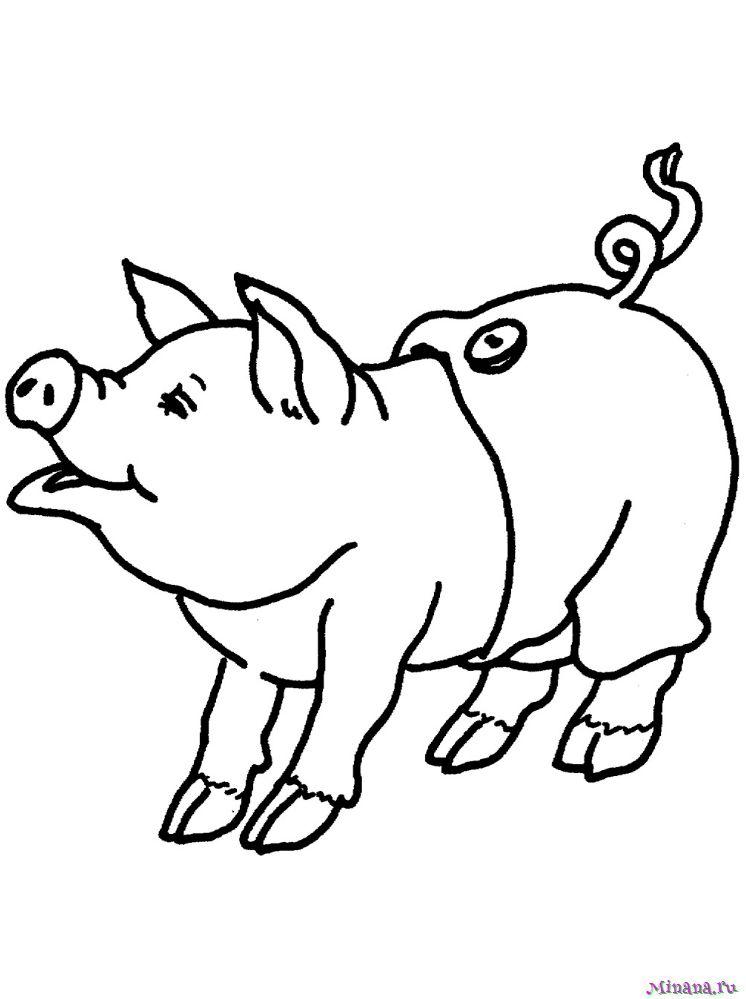 Раскраска свинья 3