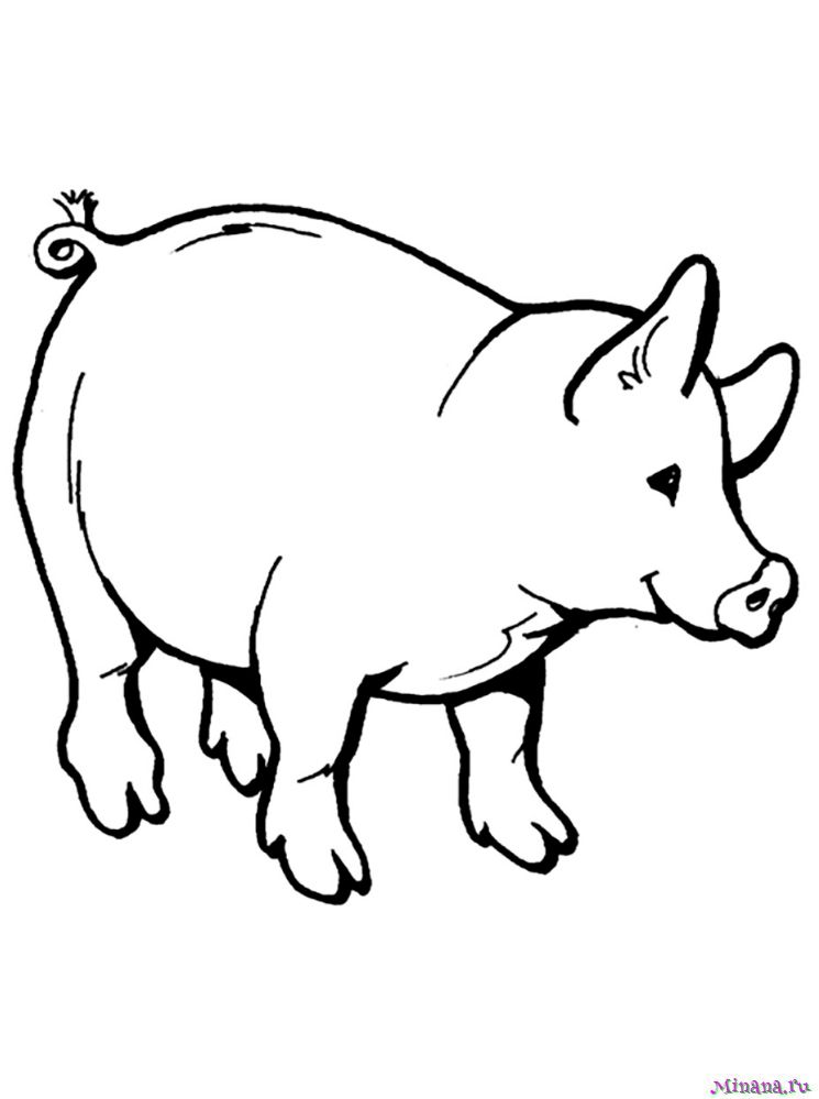 Раскраска свинья 5