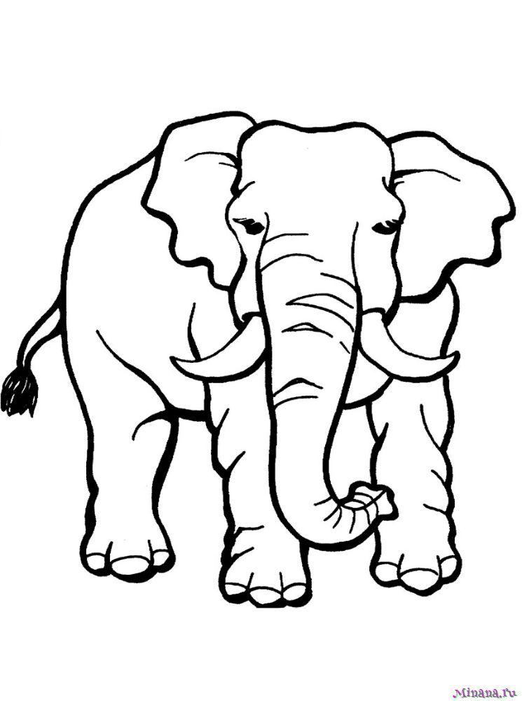 Раскраска слон 3