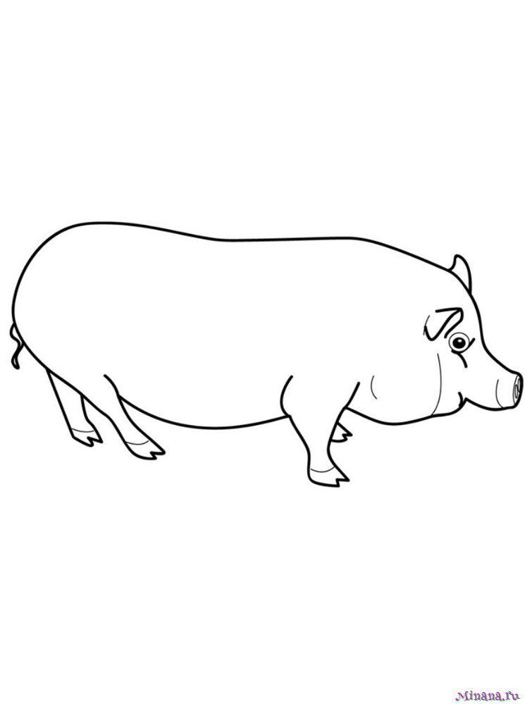 Раскроаска большой свин