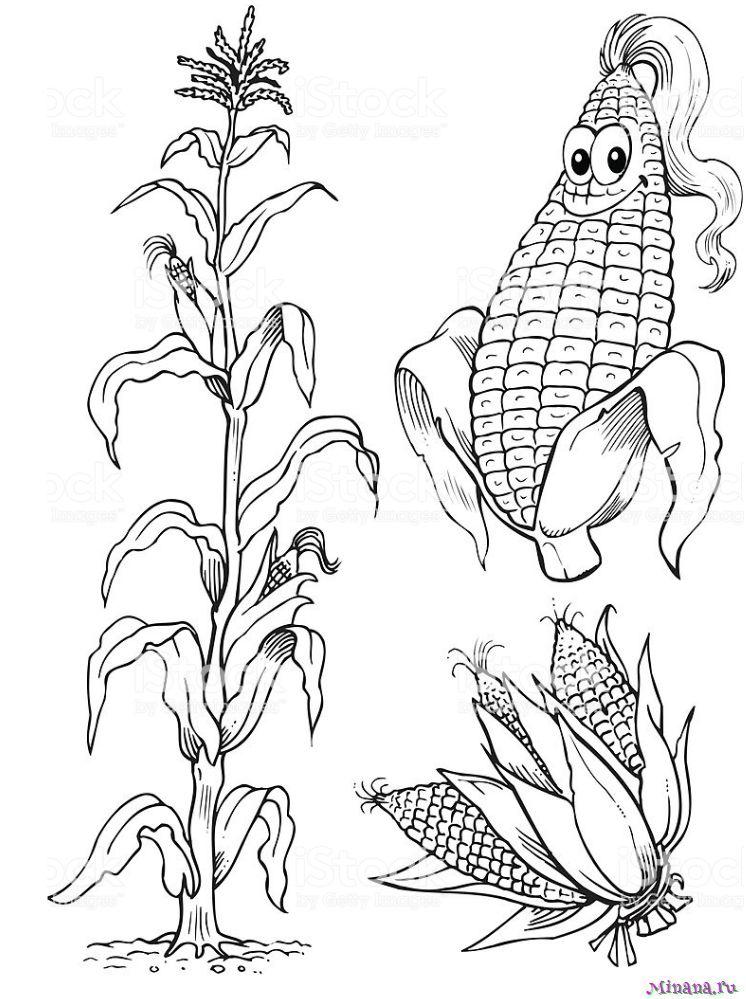 Раскраска кукуруза 10
