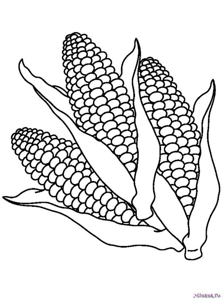 Раскраска кукуруза 11