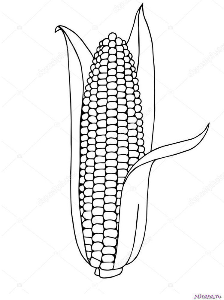 Раскраска кукуруза 12