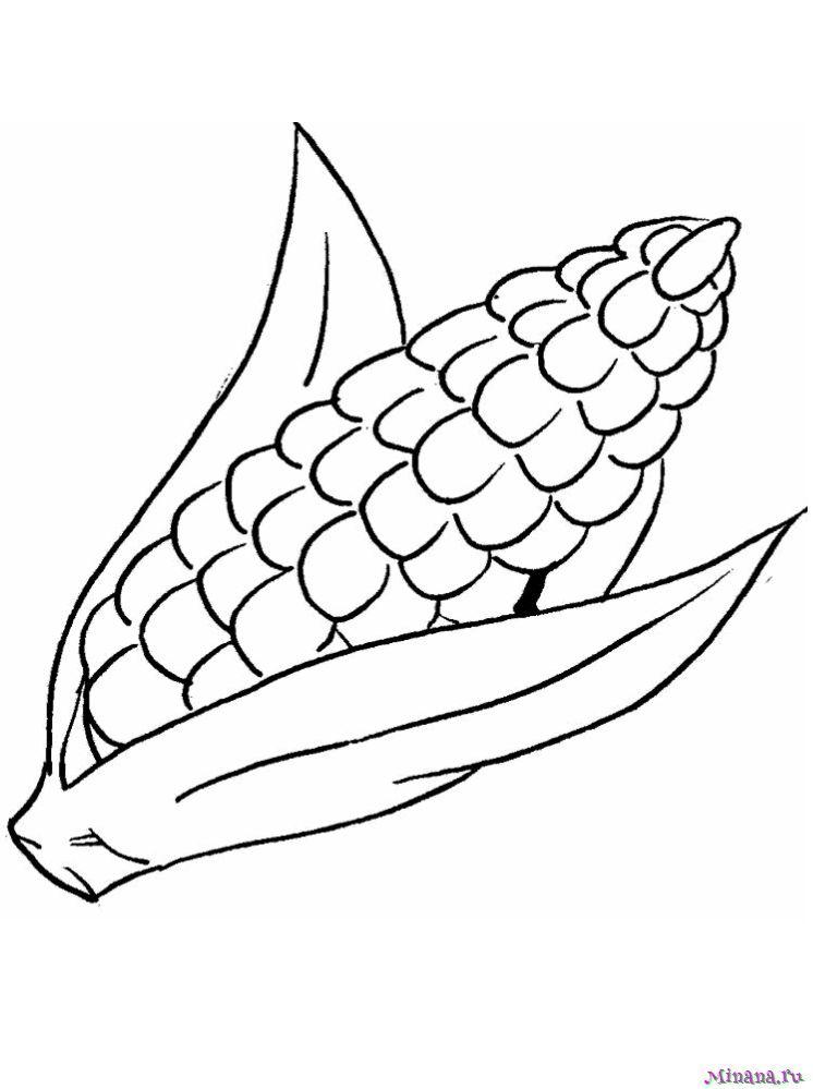 Раскраска кукуруза 3