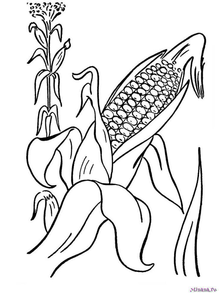 Раскраска кукуруза 4