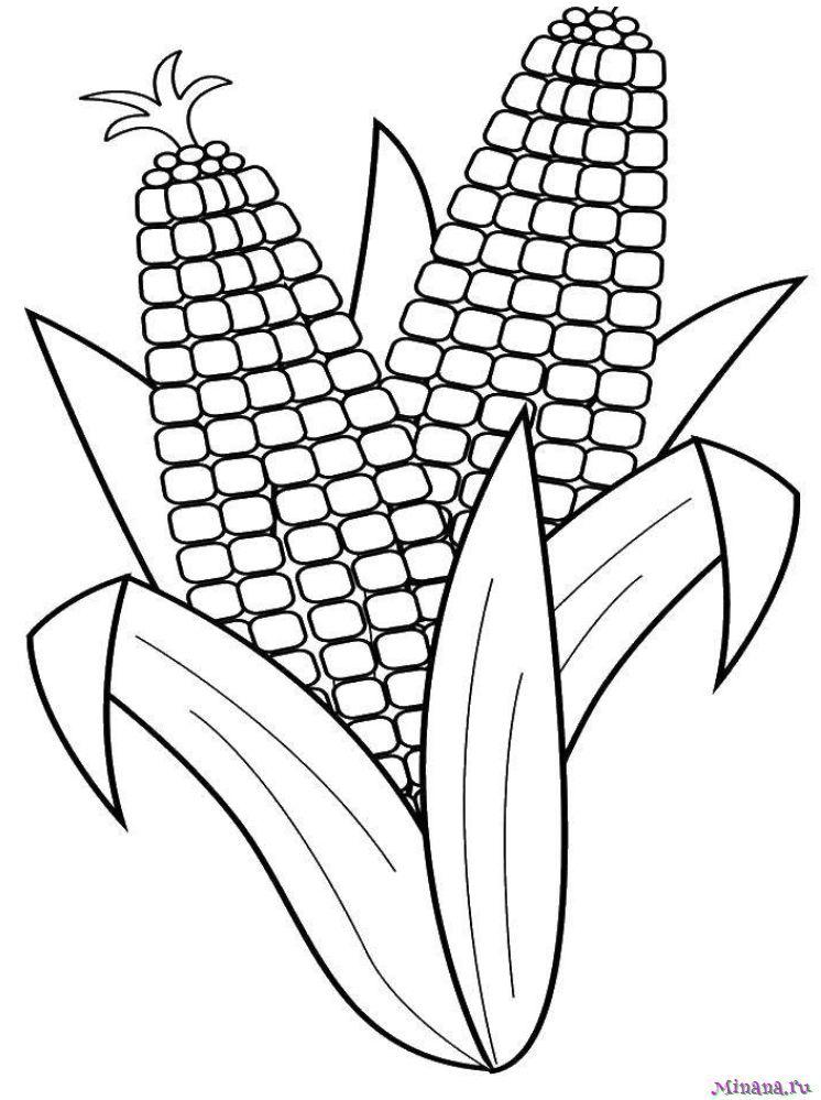Раскраска кукуруза 5