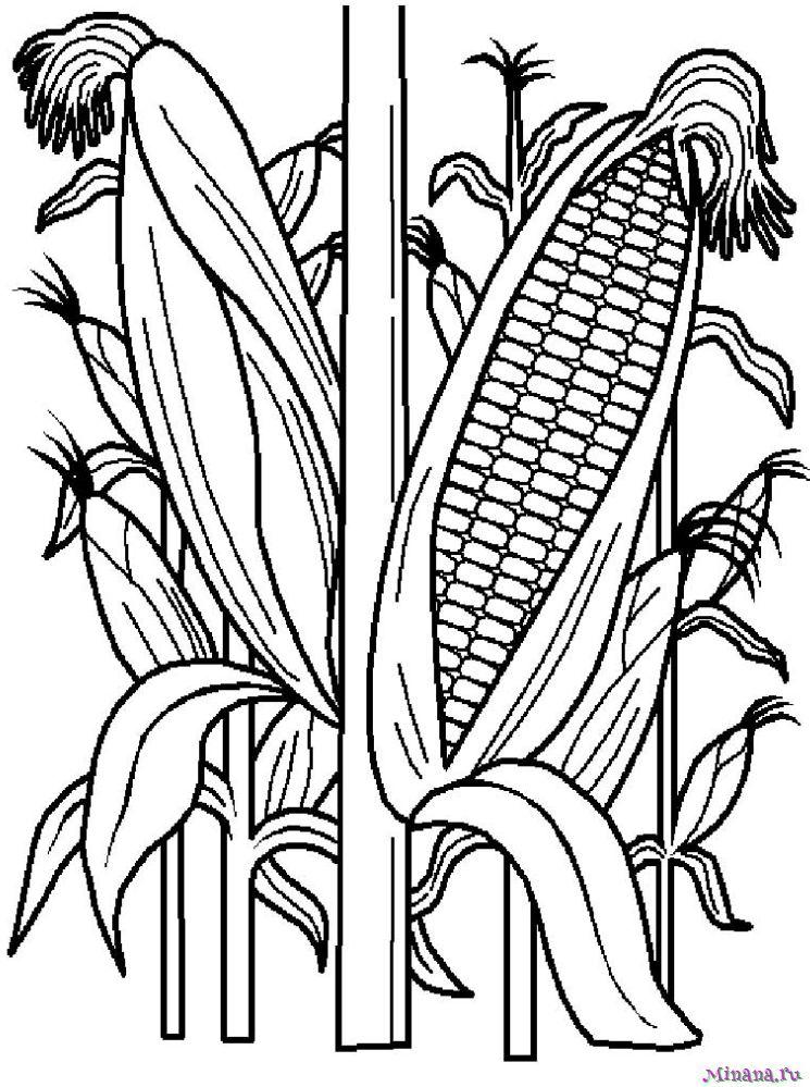 Раскраска кукуруза 7