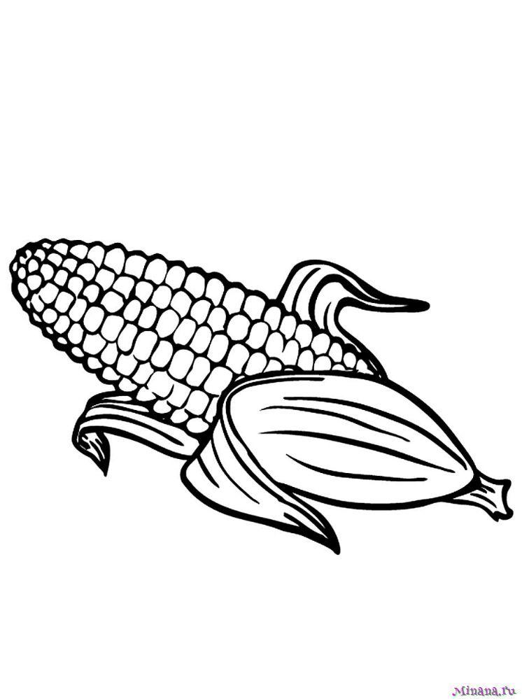 Раскраска кукуруза 8