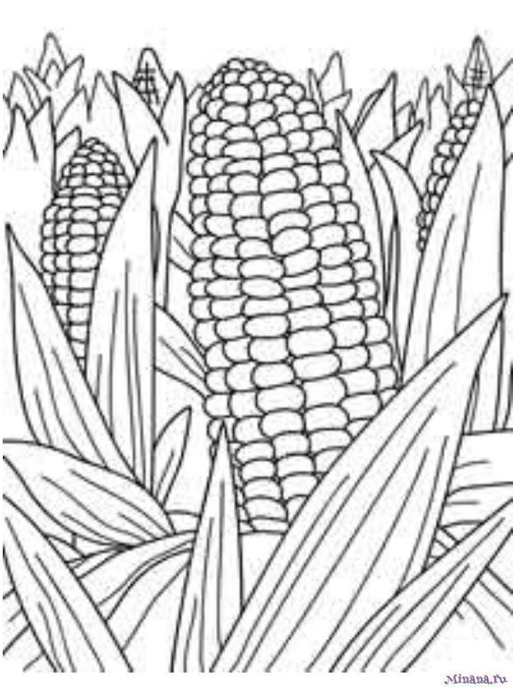 Раскраска кукуруза 9